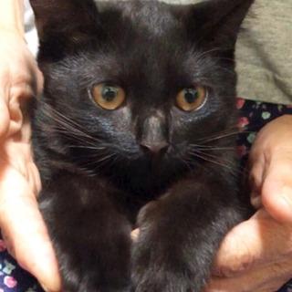 家族が決まりました☺︎【黒猫】生後4ヶ月 男の子 - 長生郡