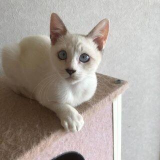 ブルーな瞳が可愛いね(*^^*) ちょっとどんくさい?3ヶ月女の子です!  − 福岡県