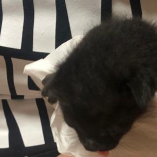 八月末生まれの黒猫ちゃん