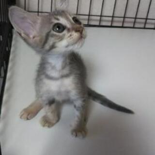 【募集終了しました】子猫の里親さん募集