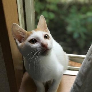 人も猫も大好き性格が良い白茶君 家族募集です