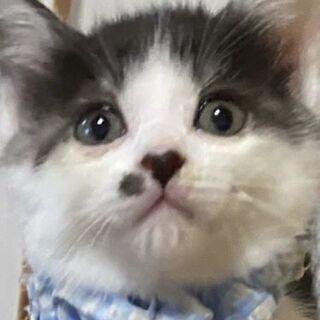 保護猫の里親さん募集しています。9/13(日)譲渡会があります。 - 塩竈市