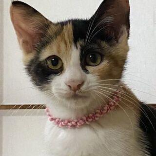保護猫の里親さん募集しています。9/13(日)譲渡会があります。 − 宮城県