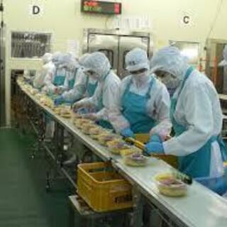 食品工場❗️品質管理担当☝️59歳まで応募可✨✨年収550万可🌸...