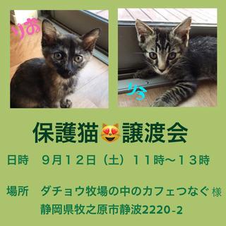 譲渡会☆お知らせ♪ 9/12(土)