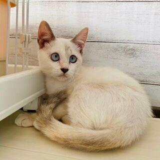 ブルーな瞳が可愛いね(*^^*) ちょっとどんくさい?3ヶ月女の...
