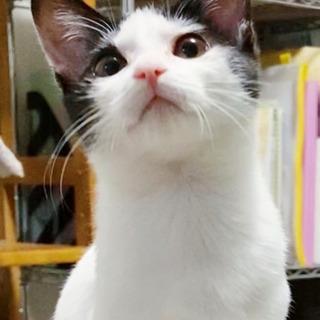 ★子猫5ヶ月 里親様募集★