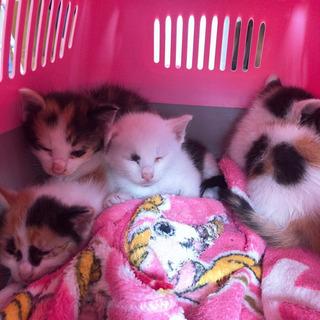 生後約1ヶ月の子猫4匹です
