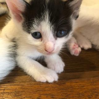 生後1ヶ月の子猫3匹