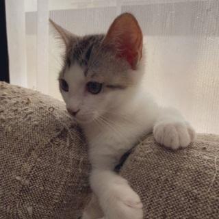 猫ちゃん里親募集