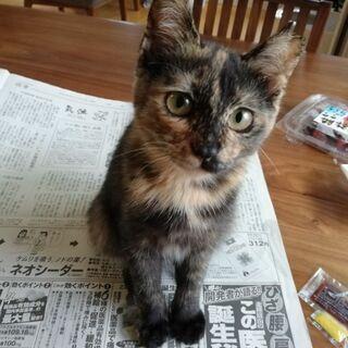 4ヶ月の仔猫