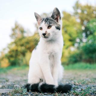 生後5ヶ月前後の子猫と1歳の仔の里親募集 - 猫