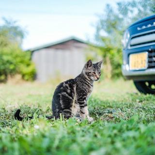 生後5ヶ月前後の子猫と1歳の仔の里親募集 − 北海道