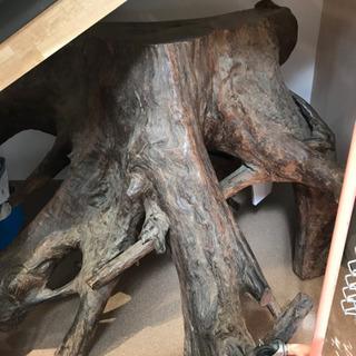 天然木 木の根 インテリア オブジェ コンソール 一点物