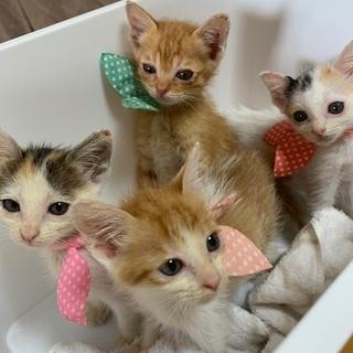 4匹子猫 生後3週間くらい