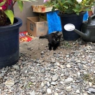 黒猫、三毛、茶白、サビ、10匹以上います。