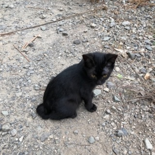黒猫、三毛、茶白、サビ、10匹以上います。 - 南巨摩郡
