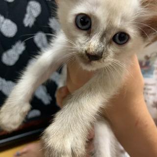 保護猫 生後1〜2ヶ月女のコ