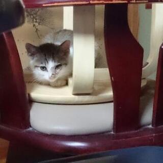 3ヶ月仔猫  3匹  兄妹  代理投稿 - 猫