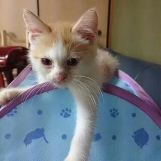 3ヶ月仔猫  3匹  兄妹  代理投稿