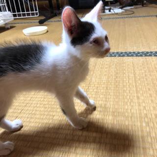 生後3ヶ月くらいの白黒の子猫(譲渡希望者様と交渉中)