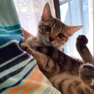 生後2~3か月の子猫の里親募集
