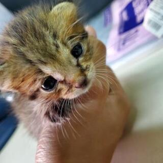 ★急募★子猫の里親募集