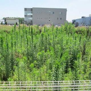 空き地・空き家の草刈り、木の伐採【隣家に迷惑にならないように対応...
