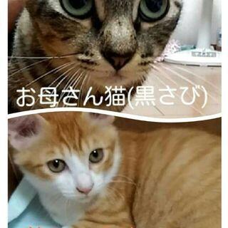 保護猫ちゃんの里親募集!出来れば親子でお願いしますm(_ _)m