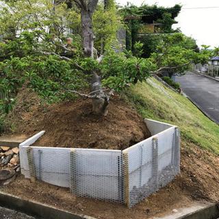 もちの木あげます!!業者の方歓迎!引き取り、掘り起こし出来…