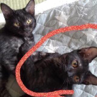 黒猫の里親募集(写真追加)