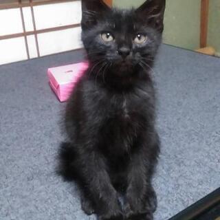 里親募集 2ヶ月の子猫3匹と母猫