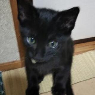 黒猫5匹兄妹、里親さん探してます。