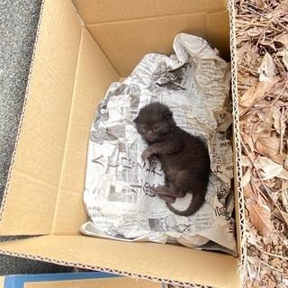 生後1週間くらいの子猫(多分男の子)の画像