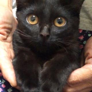 家族が決まりました☺︎【黒猫】生後4ヶ月 男の子