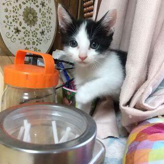 可愛い子猫ちゃん家族の一員に迎えてください!(^^)!