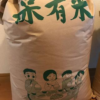 お米 30キロ 未精米