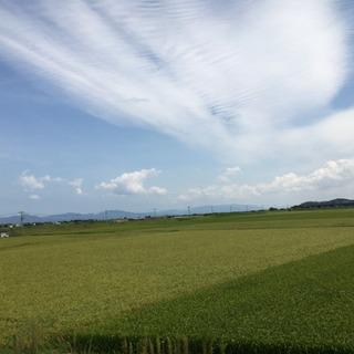受付中止中【玄米】令和元年産きぬむすめ30Kg  5000円