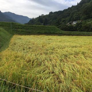 令和元年産 但馬香美町コシヒカリ(玄米)20kg (取引中)