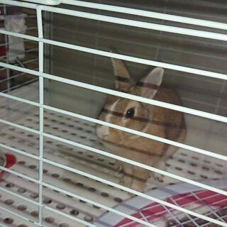 ウサギちゃん譲ります