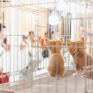 【正社員/東京🌼】子犬子猫🐱🐶のバイヤーの新しい仲間を募集します...