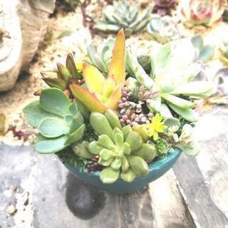 多肉植物 寄植え 硬質鹿沼土細粒使用 リメイク鉢