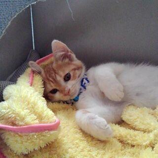 生後4ヶ月可愛い茶トラくん! - 猫