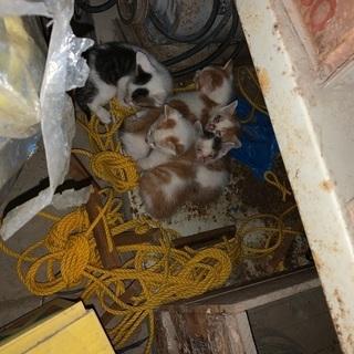 倉庫に子猫がいました