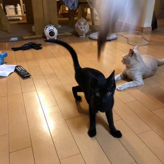 黒ネコのお嬢さん、お年寄りもご相談下さい。 - 猫