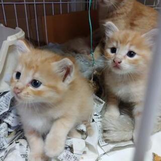 里親募集 可愛い子猫2匹