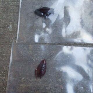 害虫・ゴキブリ駆除の画像