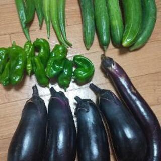 夏野菜4点盛り。
