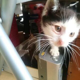 3ヶ月仔猫  3匹  兄妹  代理投稿 - 銚子市