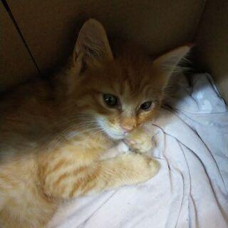 1ヶ月半くらいの子猫2ひきです